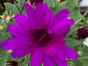 Senetti, violetti