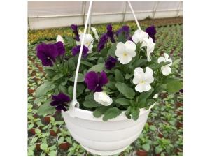 Orvokki, white bright purple, Ø23
