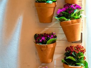 Ruukkukasvit
