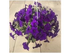 Petunia, sininen, Ø25 (amppeli)